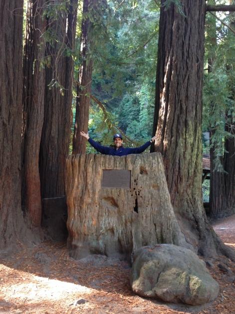 Der in a tree