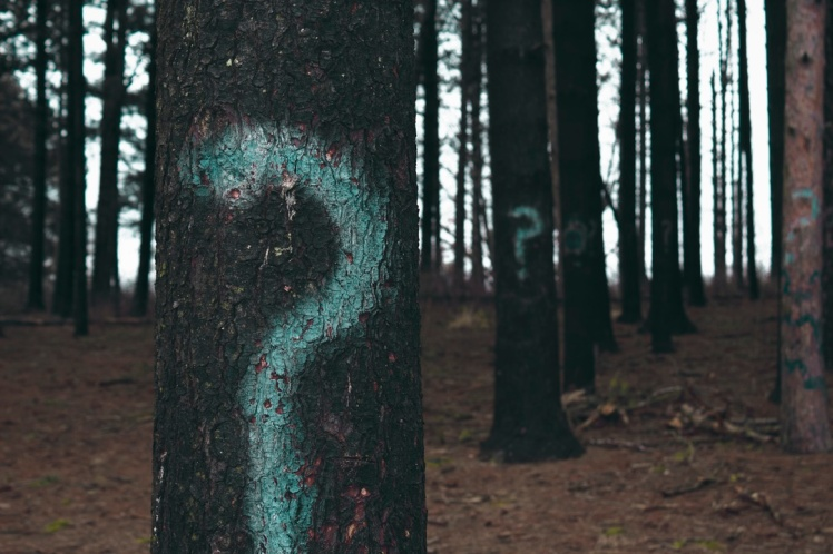 Question Mark Trees - AYP post
